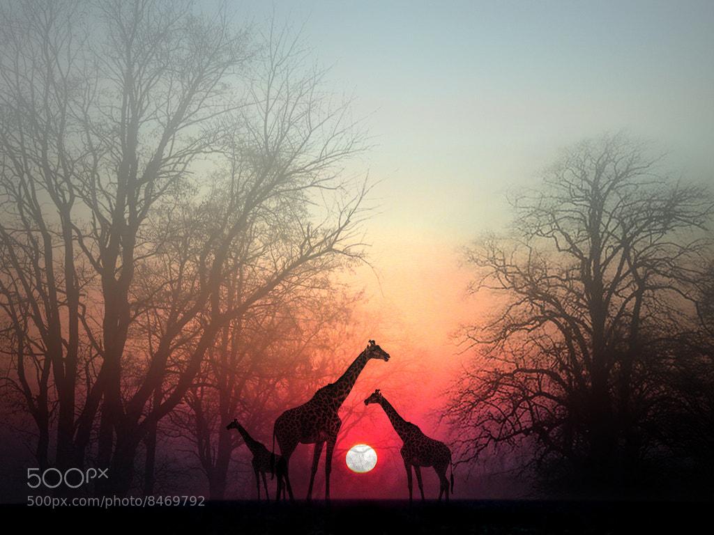 Photograph Giraffe by Perri  on 500px