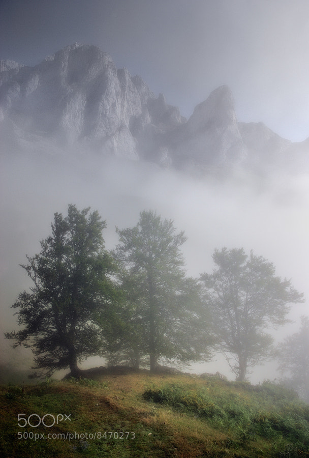 Photograph Emerging from the fog. by Angel Diego on 500px