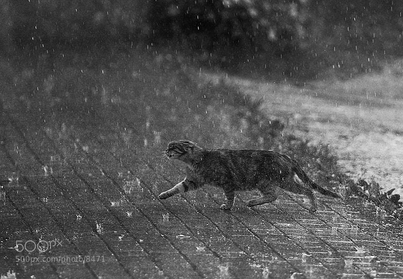 Photograph напролом by Maxim Yuldashev on 500px