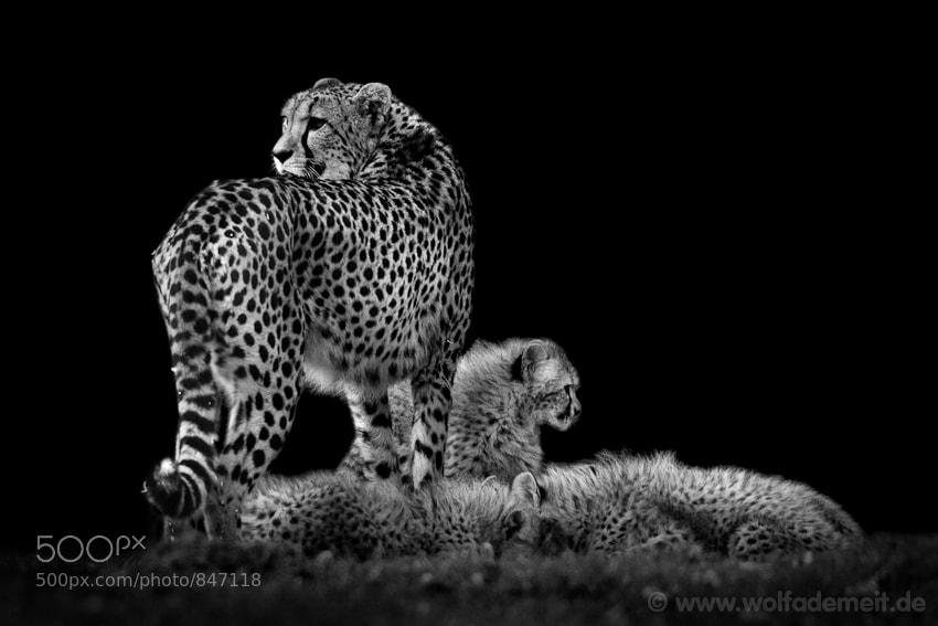 28cheetah mom