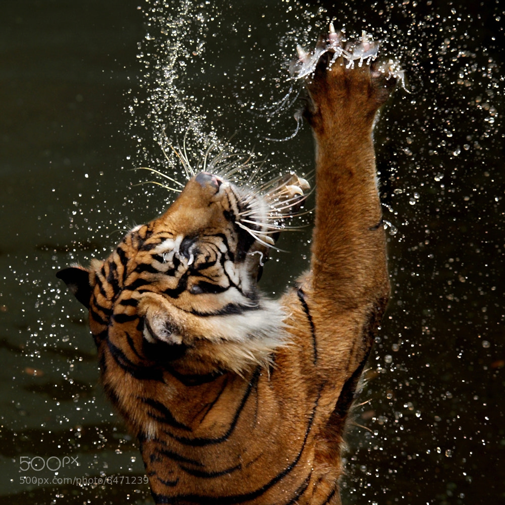 Photograph claw power by Irawan Subingar on 500px