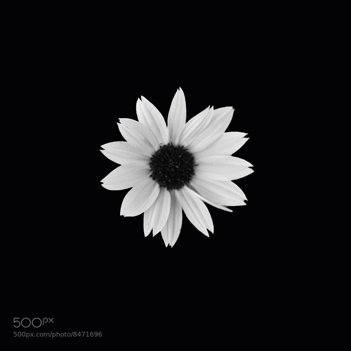 Photograph Black/White Flower by Jonathan F Miller on 500px