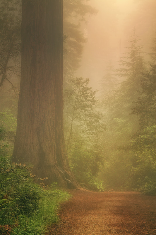 Photograph Forest Trail by Vincent James on 500px