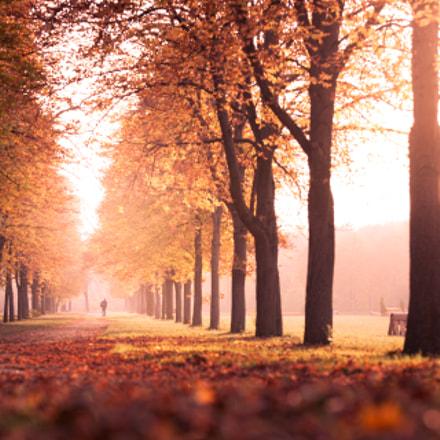 Autumn park II