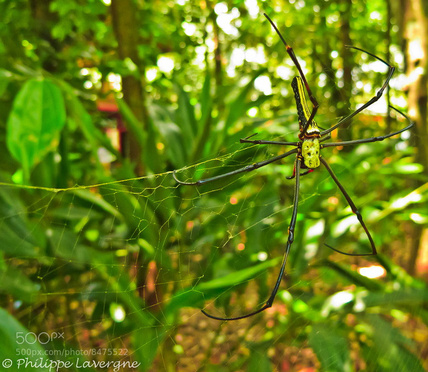 Photograph Queen of the web by Philippe Lavergne on 500px