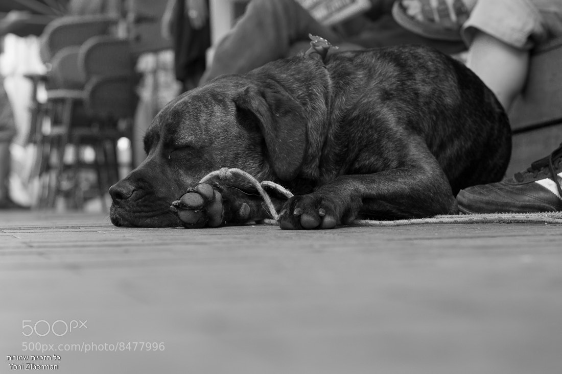 Photograph Urban Dog by Yoni Zilberman on 500px