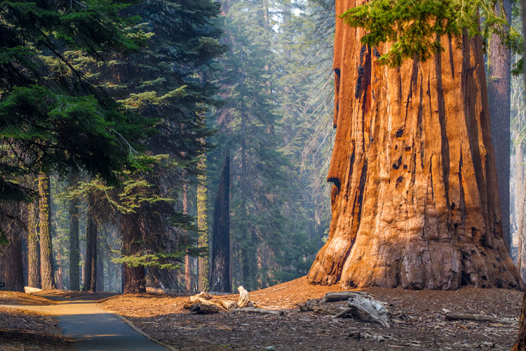 Photograph Sequoia National Park by Kris Schofield on 500px