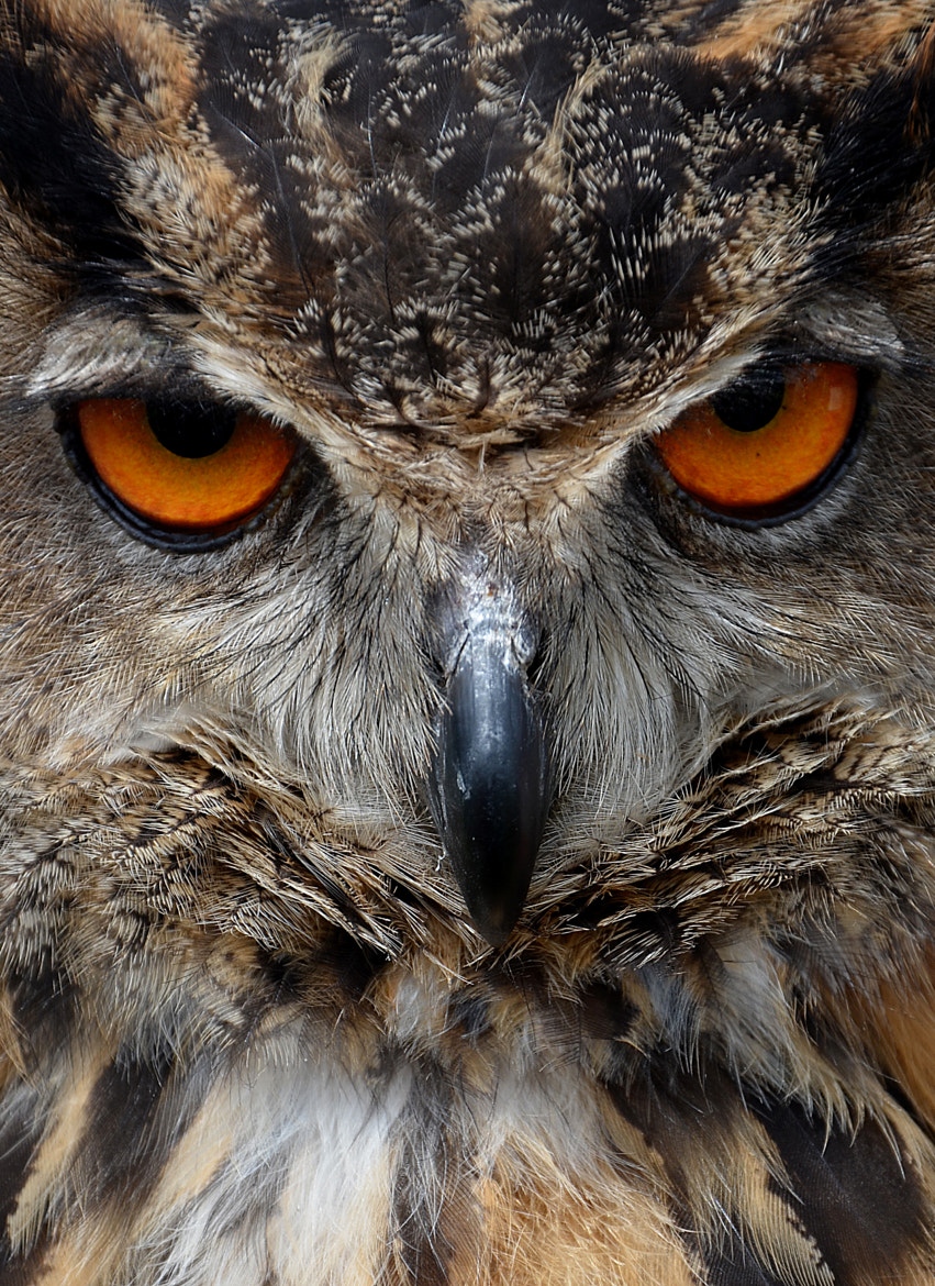 Photograph Owl by Mieke Jacobs on 500px