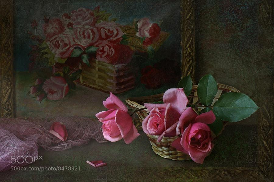 Photograph Rose. by Elena Kolesneva on 500px
