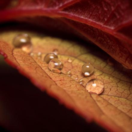 Autumn Droplets