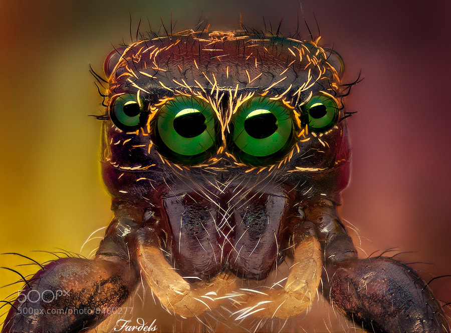 Photograph The Mentalist by Jorge Fardels  on 500px