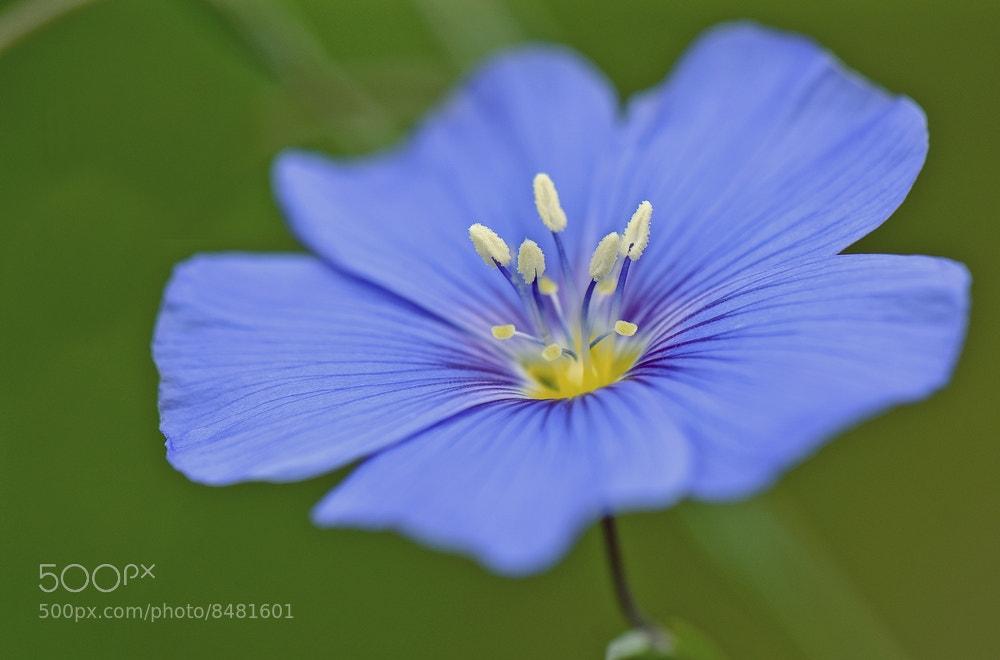 Photograph flower of romance by david penez on 500px
