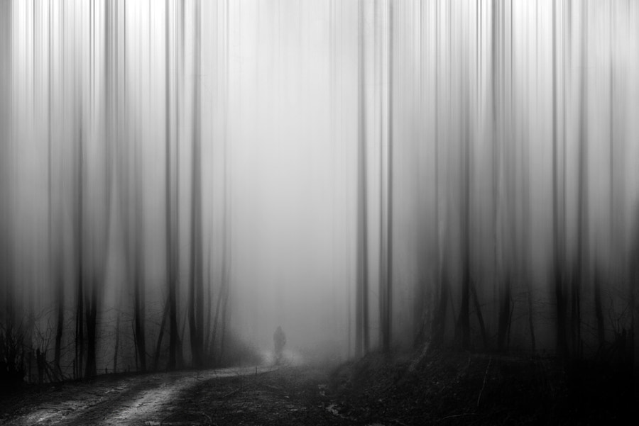 Specter in the fog by Sherry Akrami on 500px.com