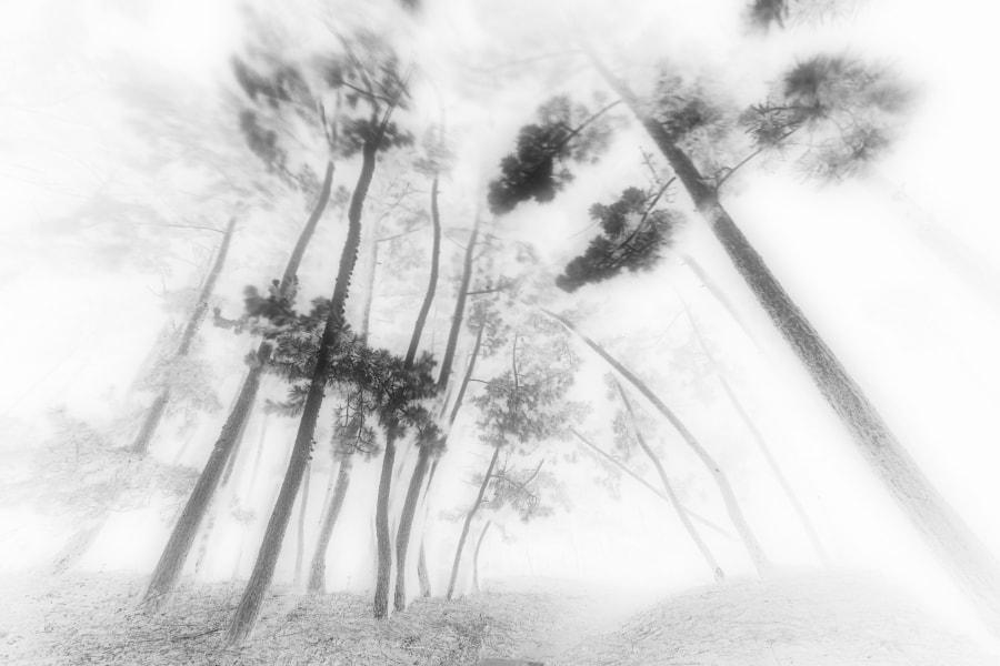 松林図(Pine Forest)