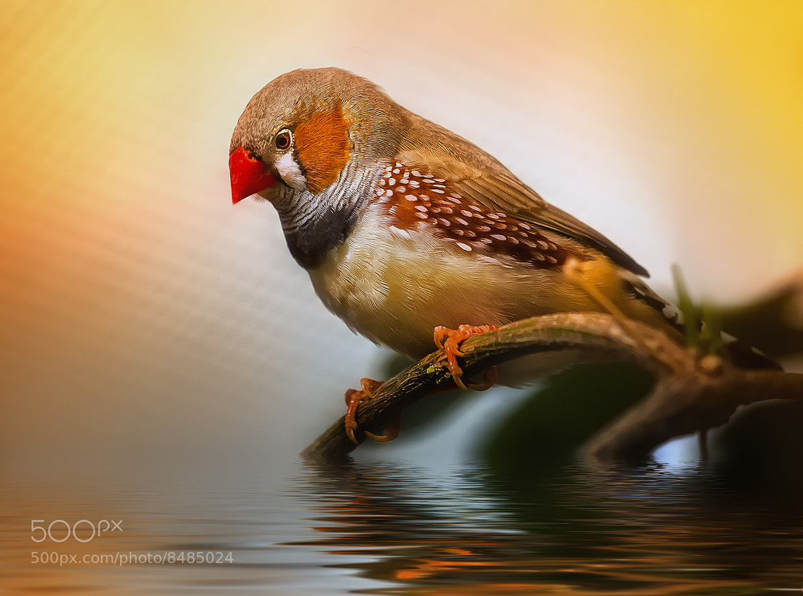 Photograph red nose by Detlef Knapp on 500px