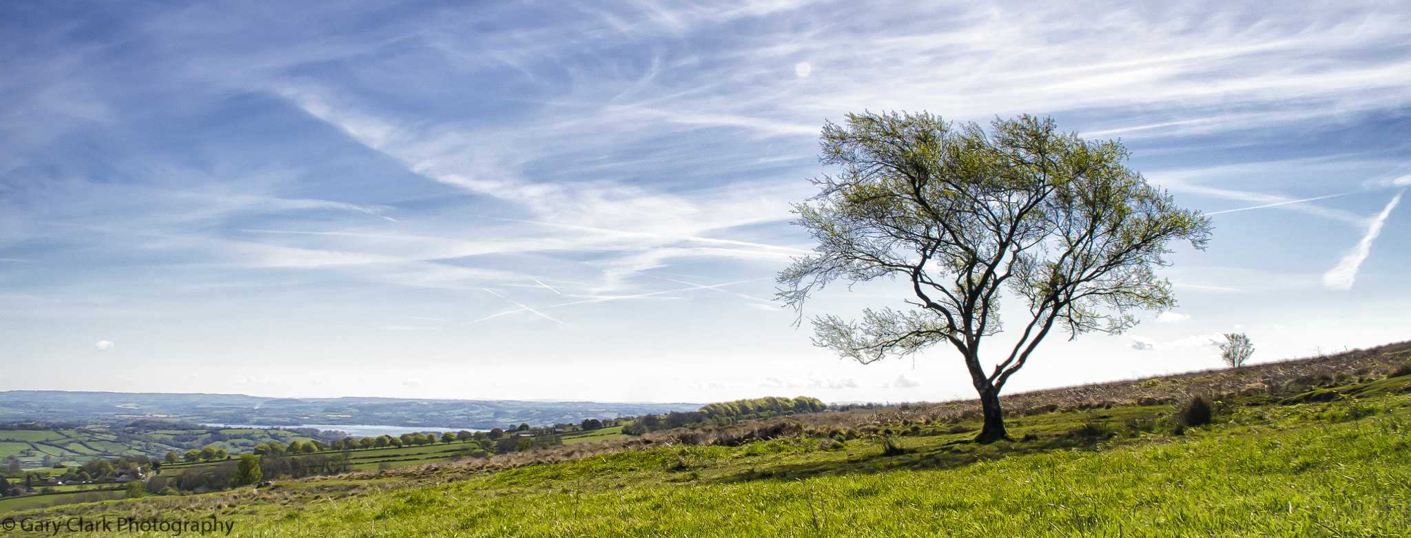 Photograph Mendip Lone Tree by Gary Clark on 500px