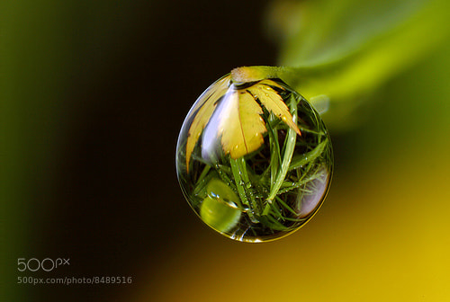 Photograph Natural Refraction by Alistair Campbell on 500px