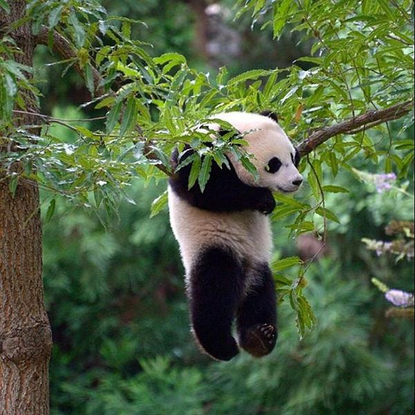 Photograph Baby Panda by kitosse on 500px