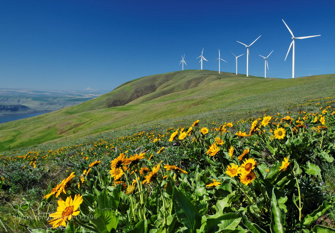 Photograph Balsamroot and wind turbines, Columbia Hills, Washington by Brad Mitchell on 500px
