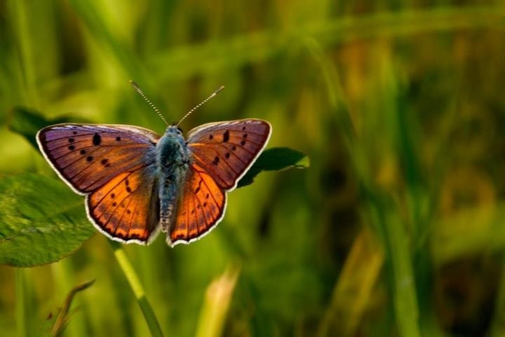 Photograph Color wings by komaromi romeo on 500px