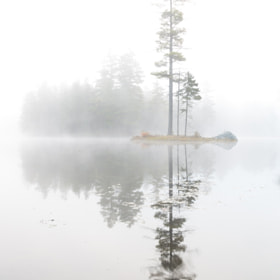Rising morning fog at the lake