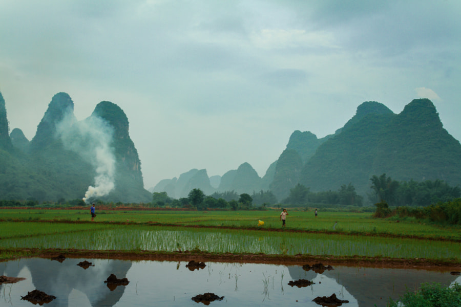 smoke in the rice fields