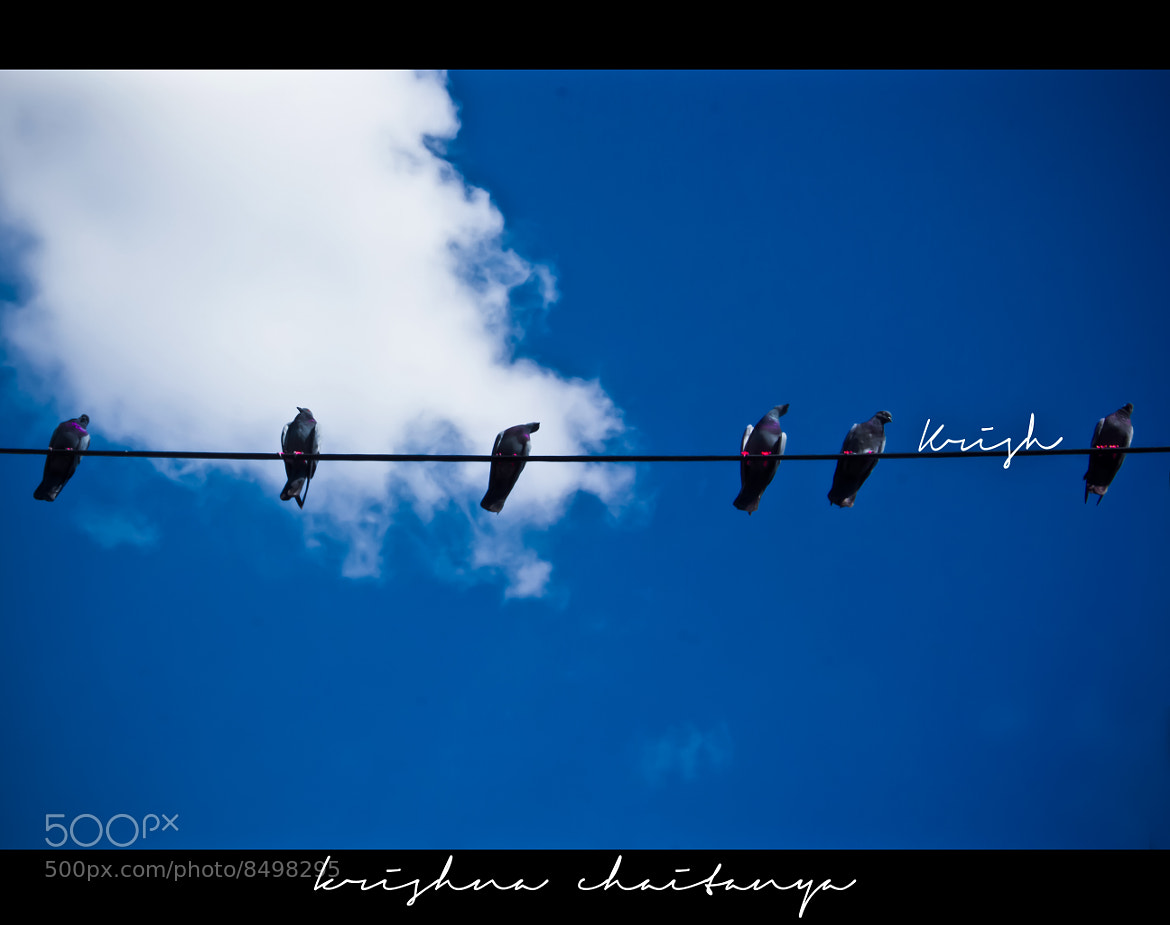 Photograph Pigeons by Krishna Chaitanya on 500px