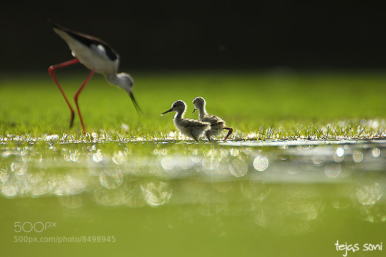 "Photograph ""Breakfast with Mom"" by Tejas Soni on 500px"