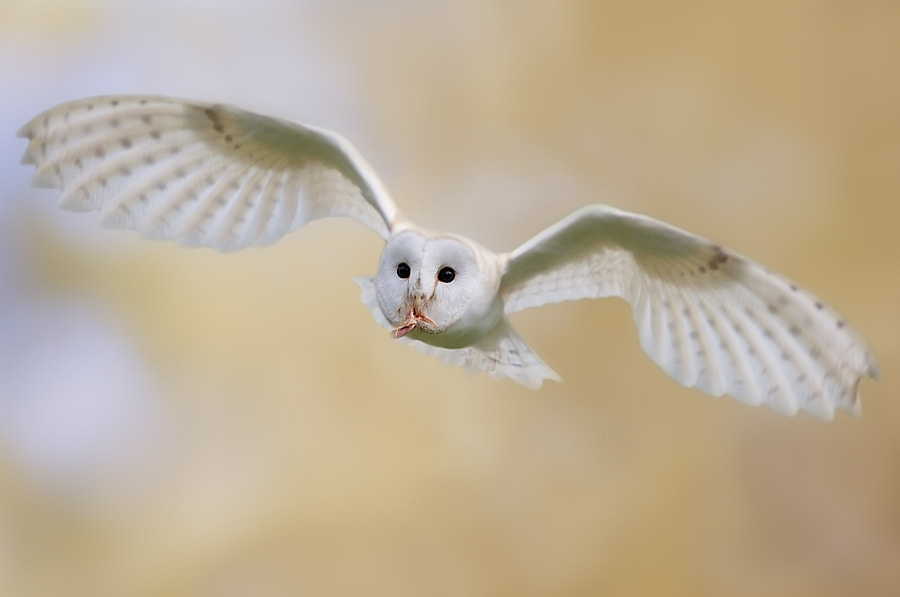 Photograph In the sky by Stefano Ronchi on 500px