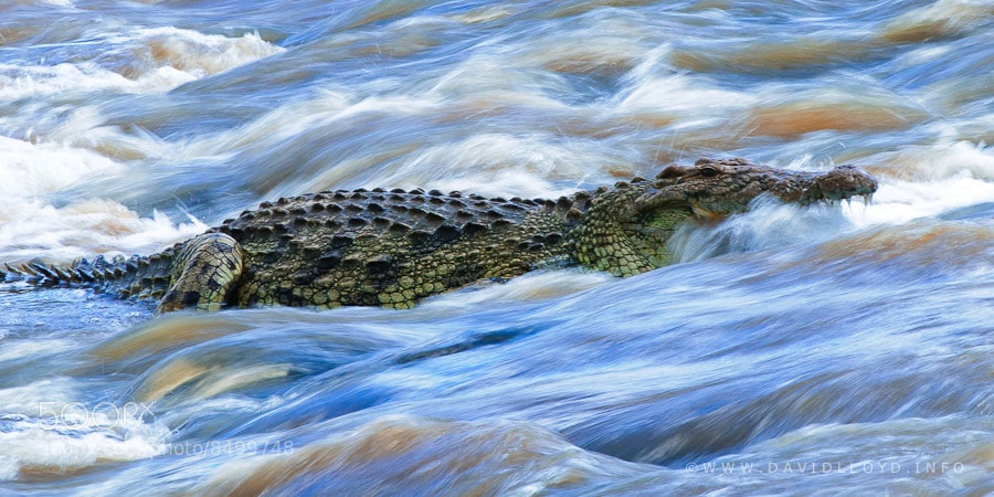 Photograph Crocodile Wash by David Lloyd on 500px