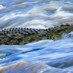 Crocodile Wash by David Lloyd (davidlloyd)) on 500px.com