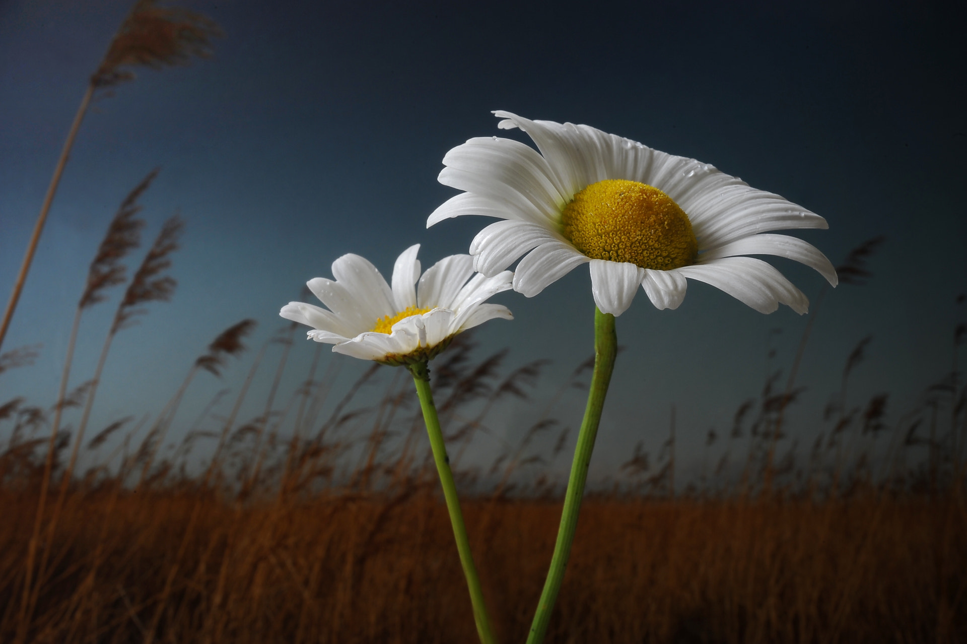 Photograph Margriet... by JohnDesq Imaging on 500px