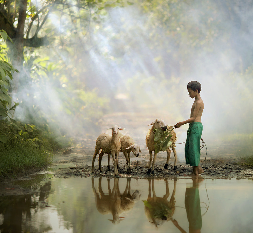 Photograph morning shepherd by asit  on 500px