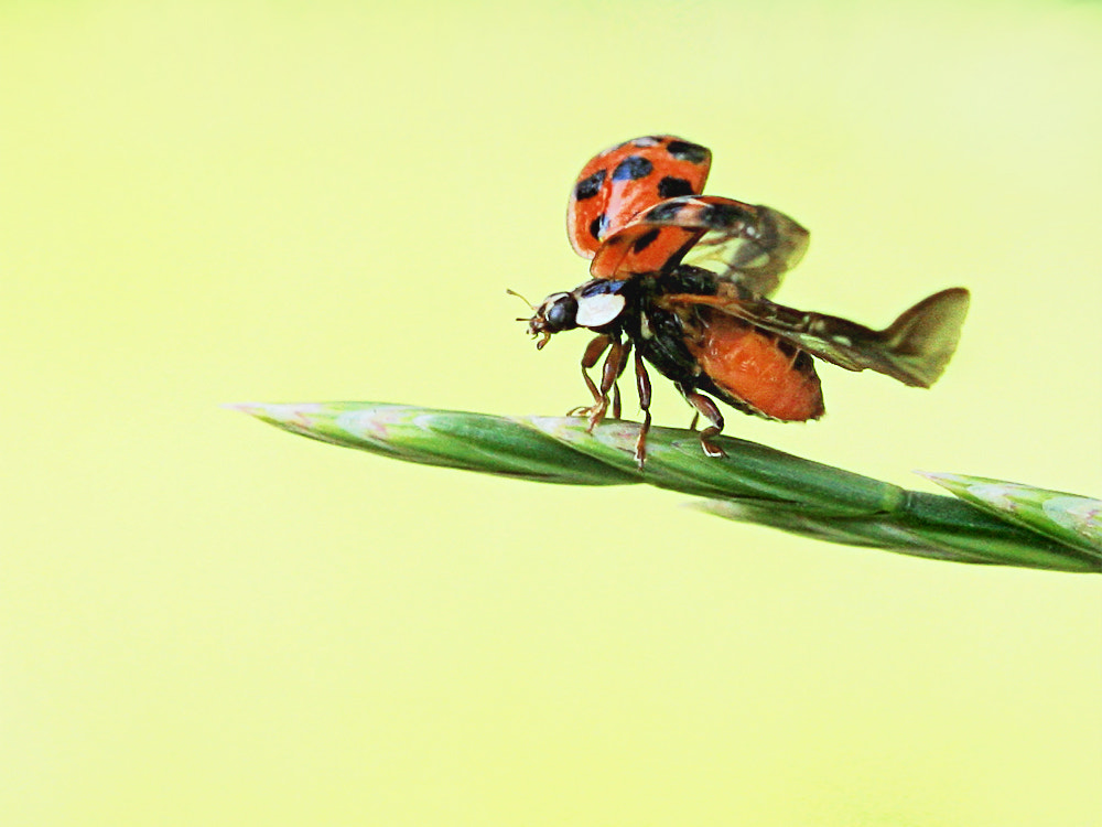 Photograph Fly! by SuSanne MarX on 500px