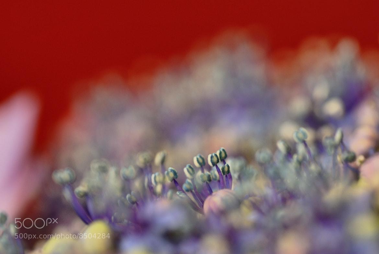 Photograph Red scenery by kazumi Ishikawa on 500px