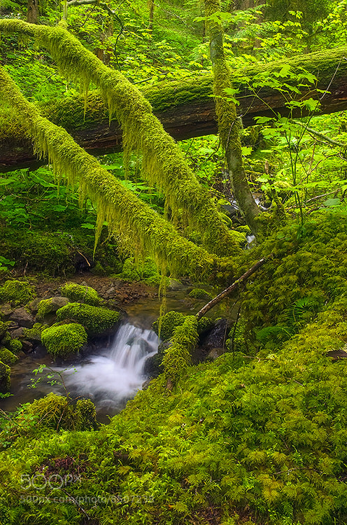 Photograph Mossy Fork by Rick Lundh on 500px