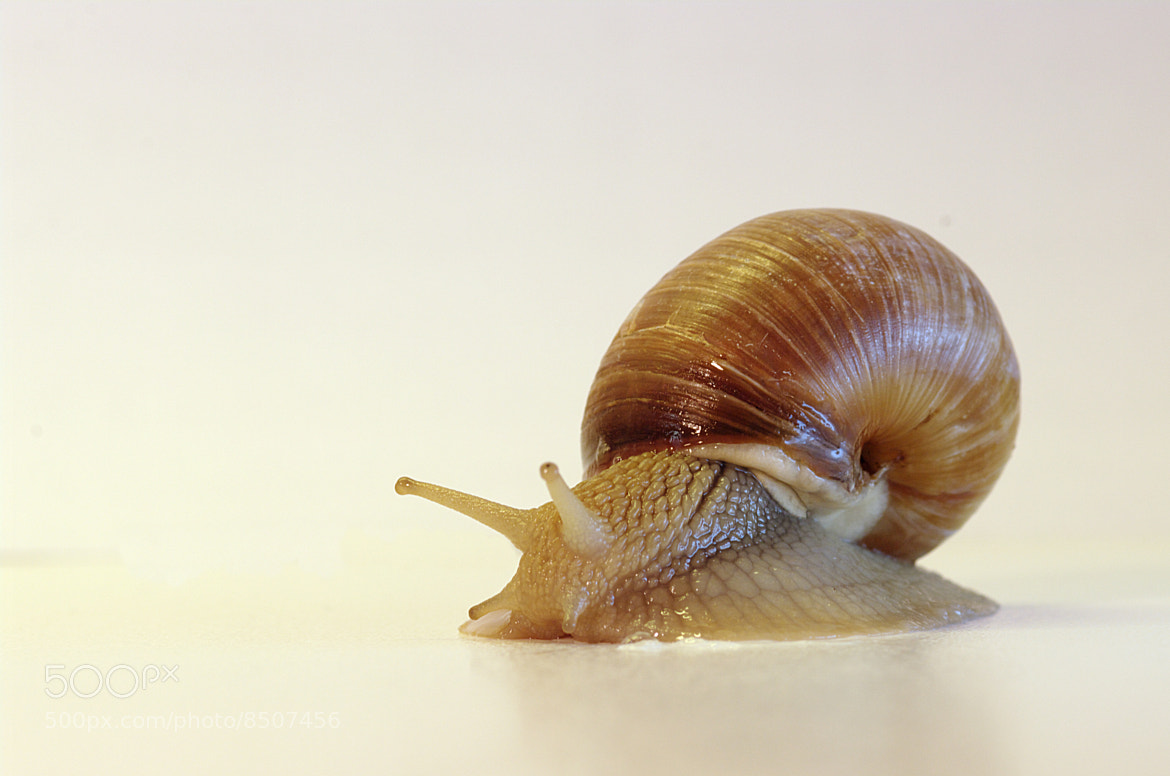 Photograph Snail by Filippo Peretti on 500px