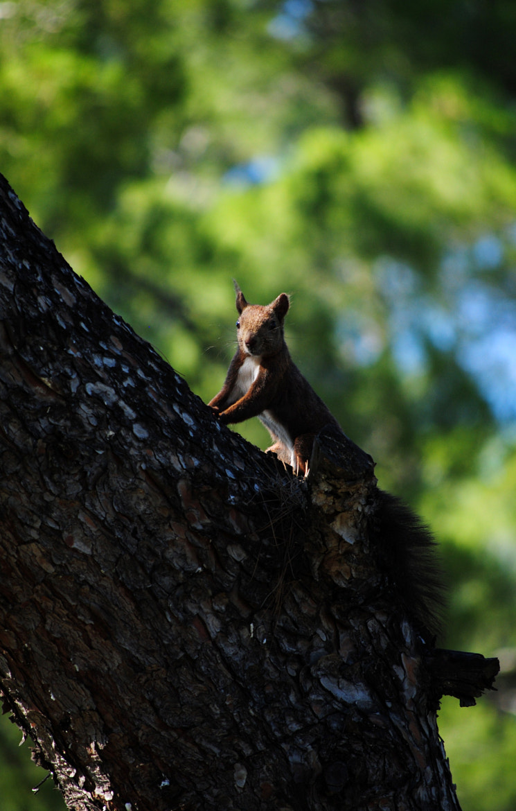 Photograph litlle squirrel....... by Harry Varsamis on 500px