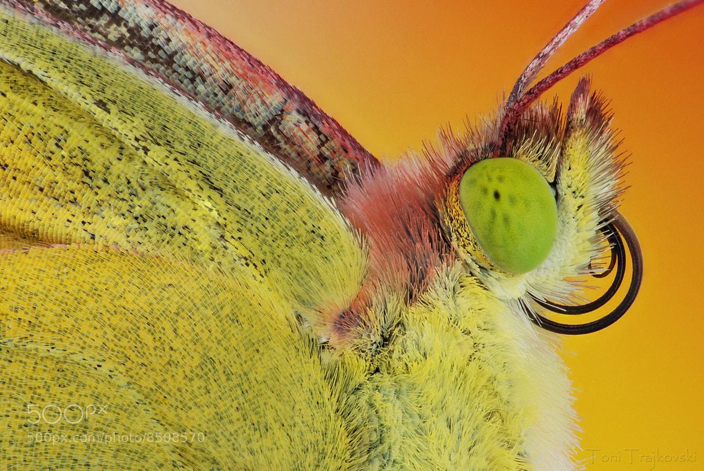 Photograph Butterfly I by Toni Trajkovski on 500px