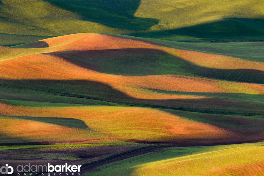 Photograph Early Light on the Palouse by Adam Barker/AdamBarkerPhotography.com on 500px
