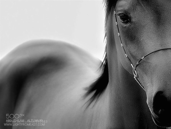 Photograph ALIYA by Abdusalam AlTuwijri on 500px