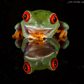 Chilling Out (Red eyed tree frog) by John Starkey (johnboy)) on 500px.com