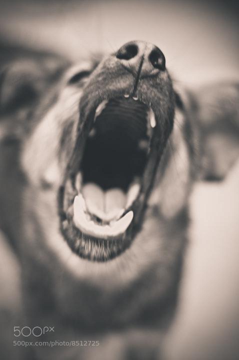 Photograph open your mouth .. Ha ha ha by Suraj Shakya on 500px