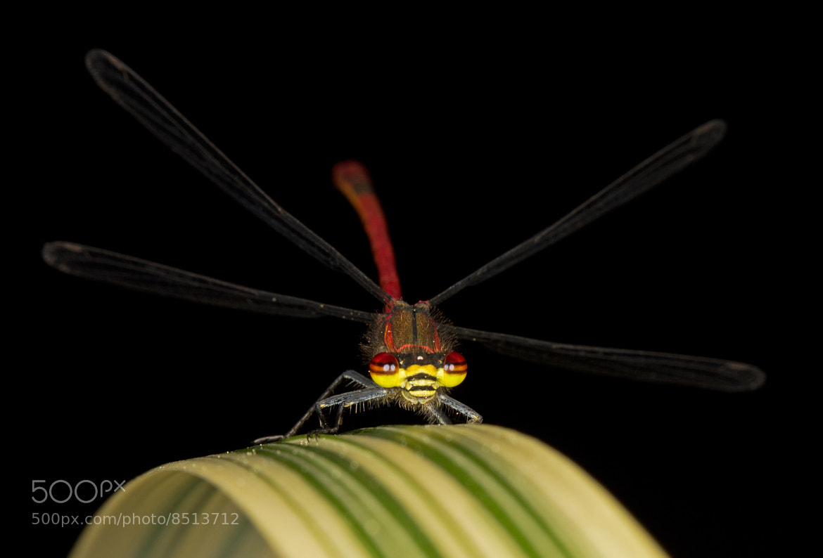 Photograph Damsel, Not Distressed by Mike Smith on 500px