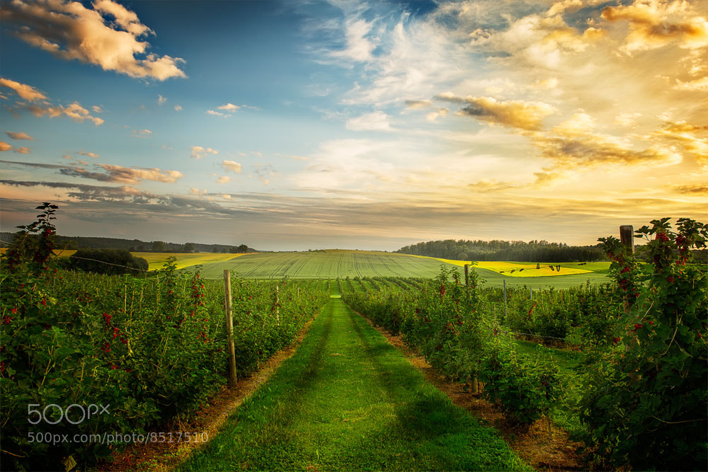 Photograph Vine by Armin Barth on 500px