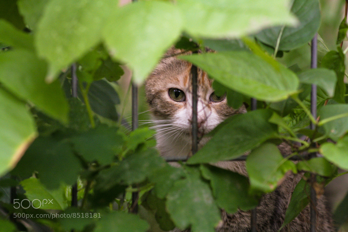 Photograph Hide n seek by Alina Simion on 500px