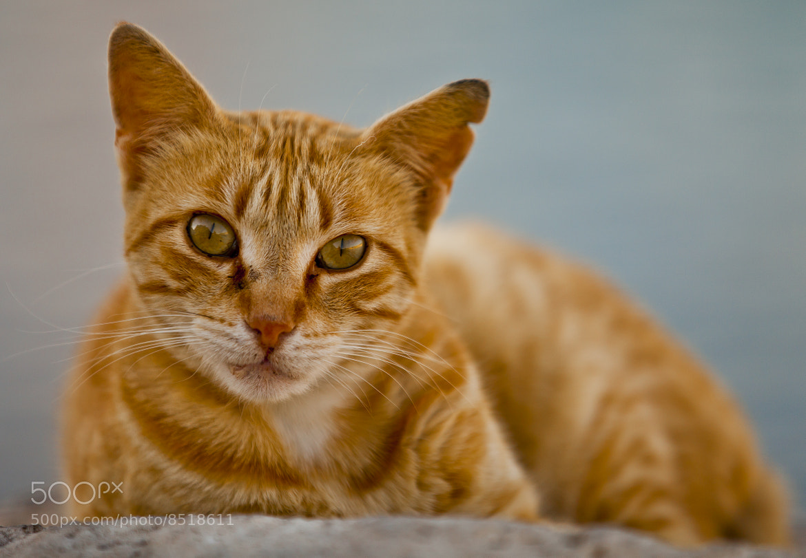 Photograph The Stare by Lee D on 500px