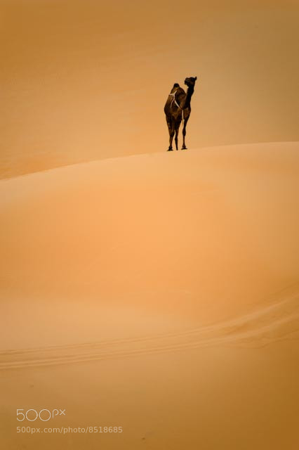Photograph Waiting by Adeeb Alani on 500px