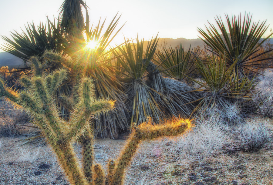 Photograph Cactus Sunset by David Edenfield on 500px