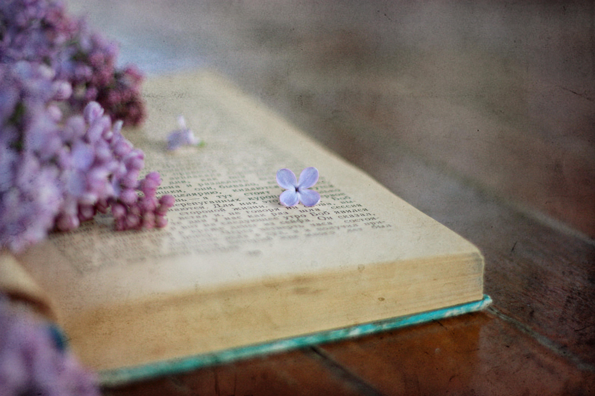Photograph Lilac and the book by Vlada Polischuck on 500px